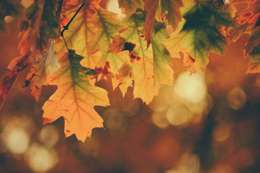 Wohlfühl-Guide für den Herbst